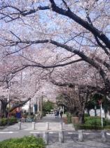 夢うさぎ「Sakura展」もこの土日で終幕です。